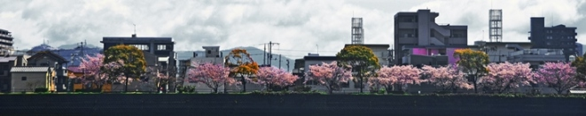 Hiroshima Riverbank Panorama